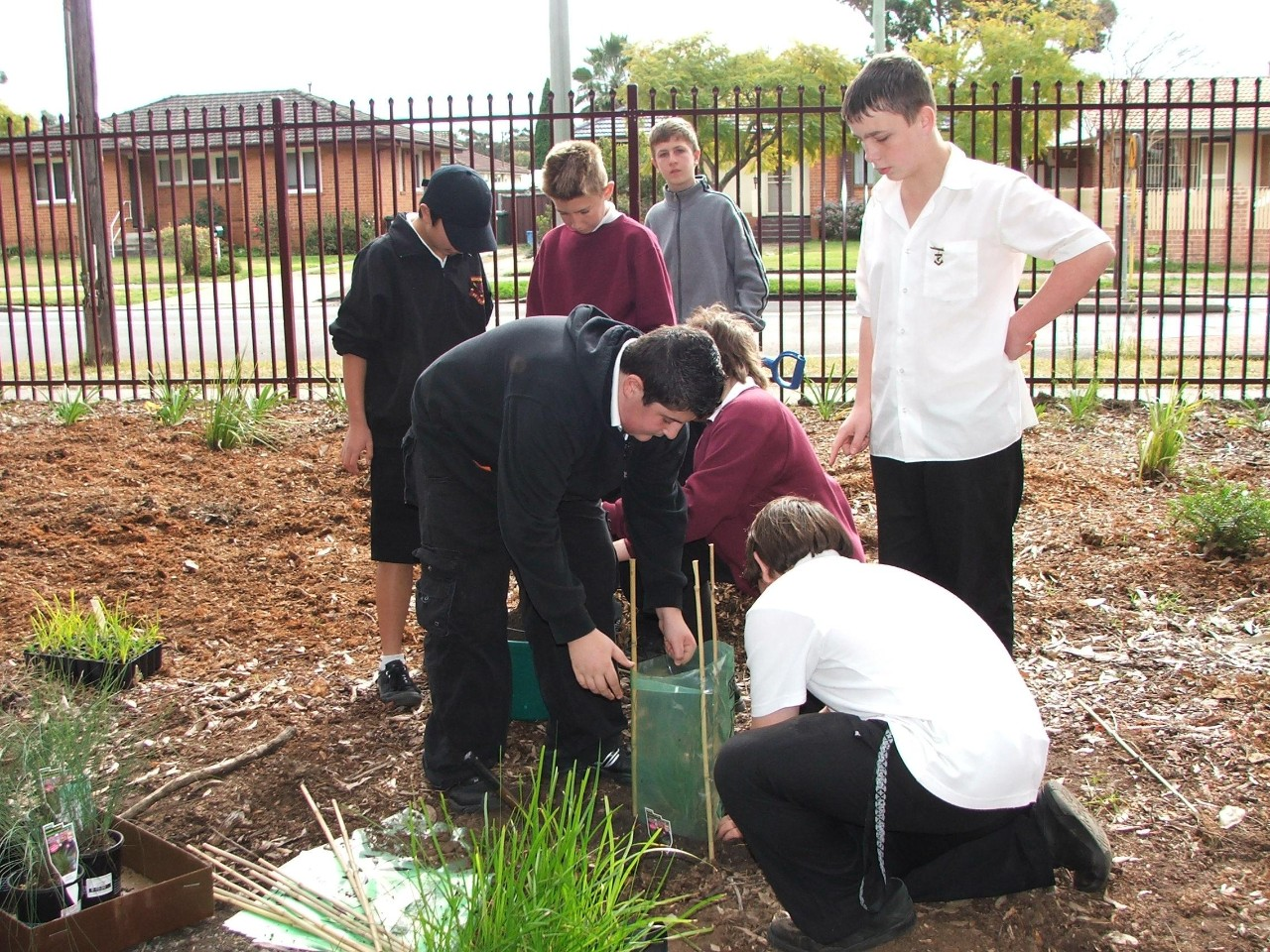 students in playground planting trees